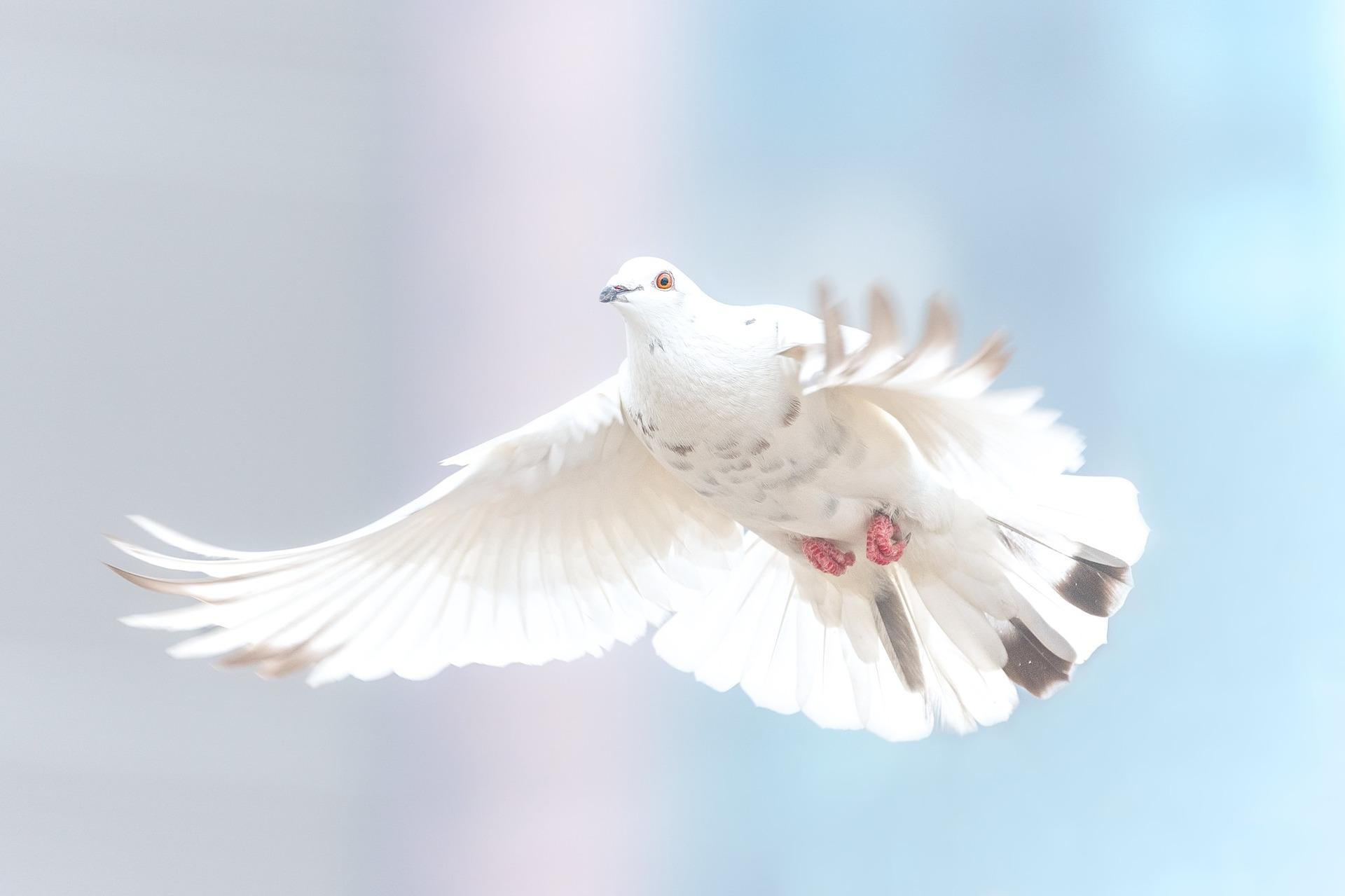 """""""Felizes os que promovem a paz, porque serão chamados filhos de Deus."""" Palavra de Vida – Junho 2018"""